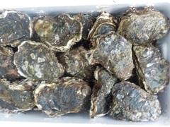 岩牡蠣201682.JPG