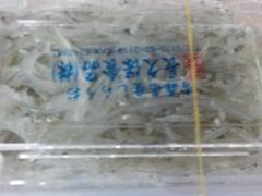 白魚2017928.JPG