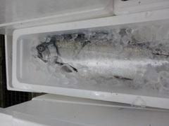 鮭20180105.JPG